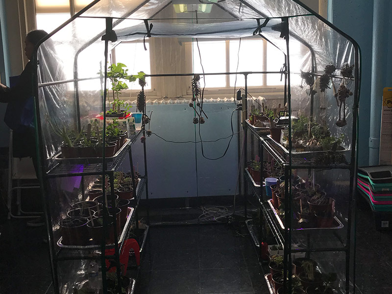 A mini greenhouse in the classroom