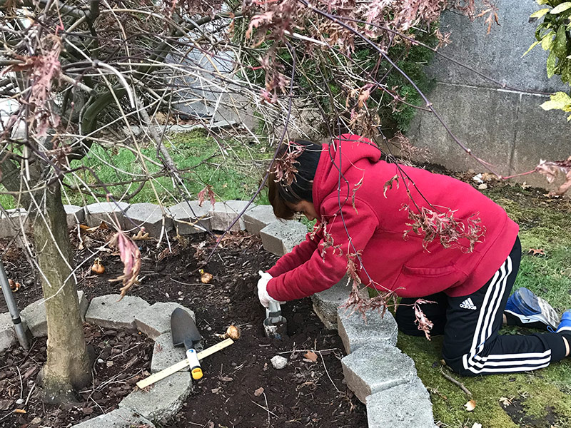 SPS student digging dirt from the Cherry blossom tree